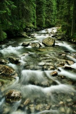 Rzeczka w Tatrach