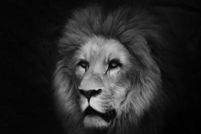 BG1398 Lew król zwierząt