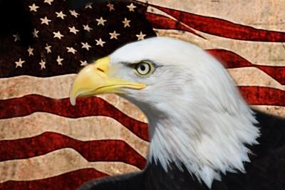 BG1442 Orzeł amerykański
