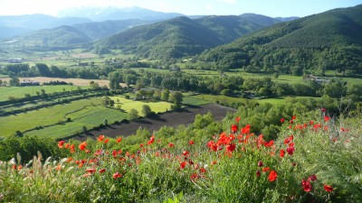 BG1488 Kwiacisty widok w górach