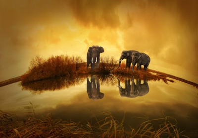 BG1523 Słonie przy wodopoju