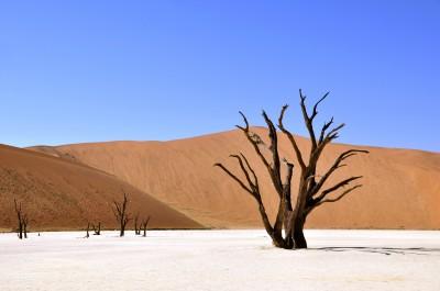 BG1531 Drzewo na pustyni