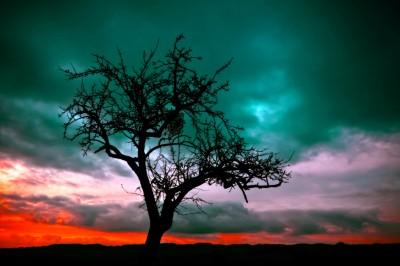 BG1532 Zachód słońca na pustyni