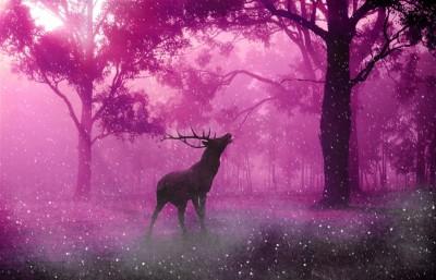 Jeleń w magicznym lesie