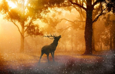 Jeleń w lesie