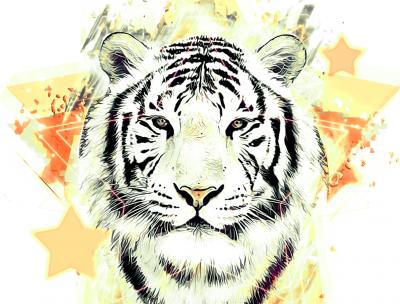 Łeb tygrysa