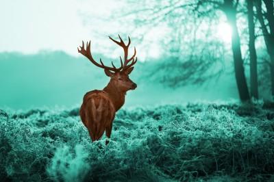 _Jeleń_z_porożem_w_turkusowym_lesie