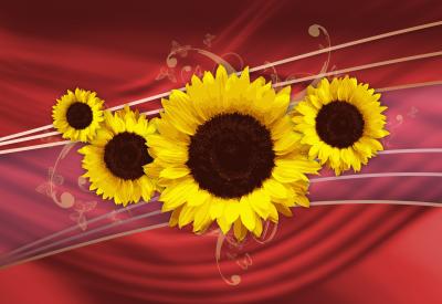 Słoneczniki - kwiatowa abstrakcja