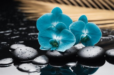 Niebieskie storczyki