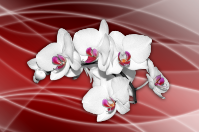 BG185 Kwiaty storczyki