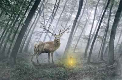 Magiczny jeleń w lesie