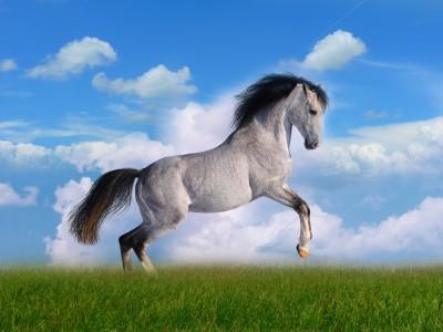 Koń staje dęba