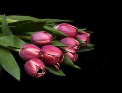 Soczyste tulipany