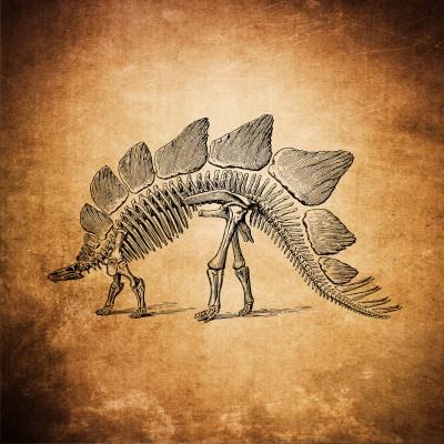 Płyty kostne Dinozaur