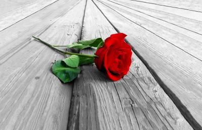 Czerwona róża na deskach