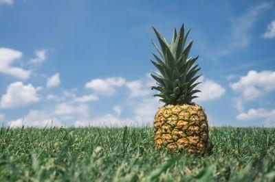 Ananasowy pejzaż