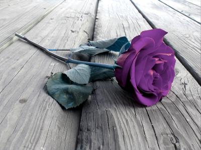 Fioletowa róża na podłodze