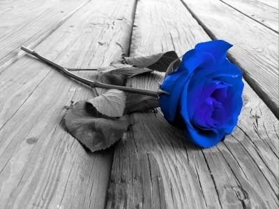 Atramentowa róża