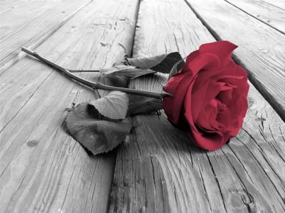 Róża na pomoście
