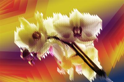 Abstrakcyjny storczyk