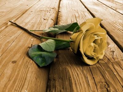 Piękna róża na deskach
