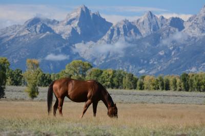Koń na prerii
