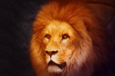 BG1397 Król lew