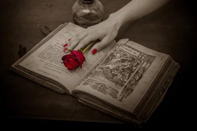 BG1460 Czerwona róża na księdze