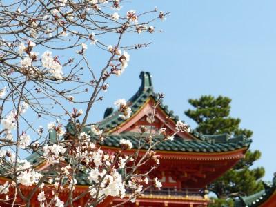 BG1468 Kwitnąca wiśnia w Japonii