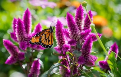 BG1507 Motylek na kwiatkach