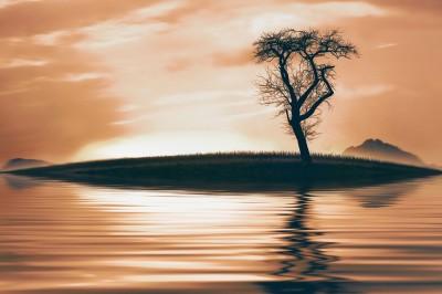 BG1533 Drzewo na wyspie