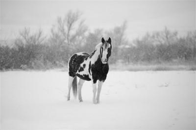 Koń w śnieżycy