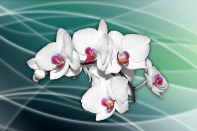 Storczyki kwiaty