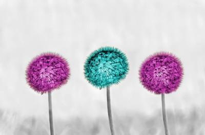 Kolorowe dmuchawce