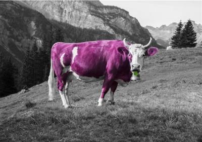 Fioletowa krowa Emilka