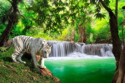Biały tygrys przy wodospadzie