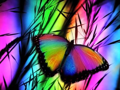 Tęczowy ptylek motylek