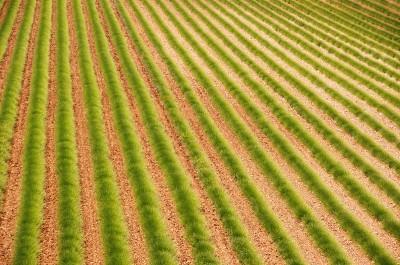 Zielona Prowansja