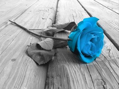 Turkusowa róża na deskach