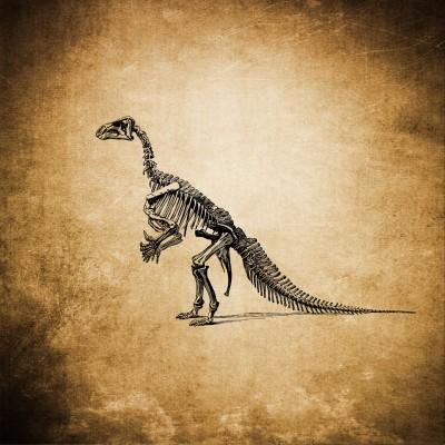 Szkielet dinozaura