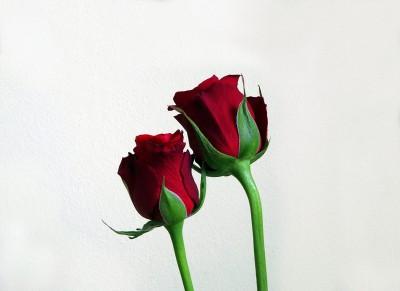 Czerwone róże dla niej
