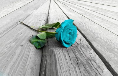 Turkusowa róża