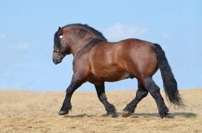 Mocny koń