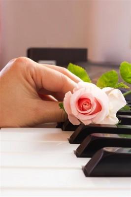 Róża na pianinie