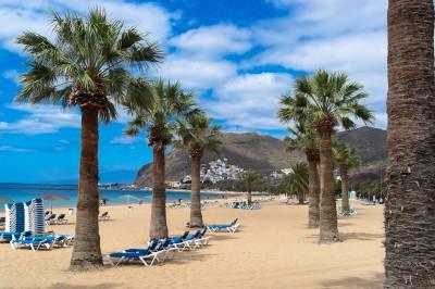 Wielkie palmy na plaży