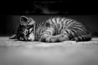 Sympatyczny kotek