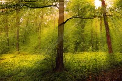 Leśny widok