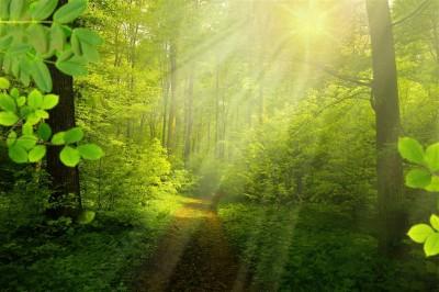 Las w promieniach
