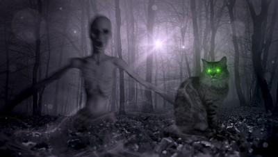 Koty chodzą własnymi ścieżkami