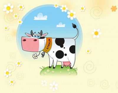 Krowa nie zmienia zdania